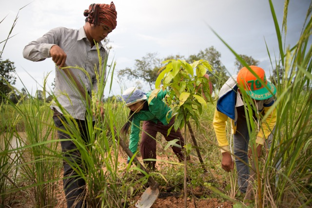 Students work on a rice paddy as part of the Green Shoots Foundation's Food & Agriculture and Social Entrepreneurship initiative.