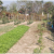 Vegetable Gardens in Cambodia Change Lives